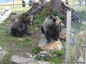 013 Grouse Mountain Grizzlies