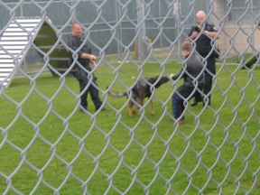 016 Dog Squad