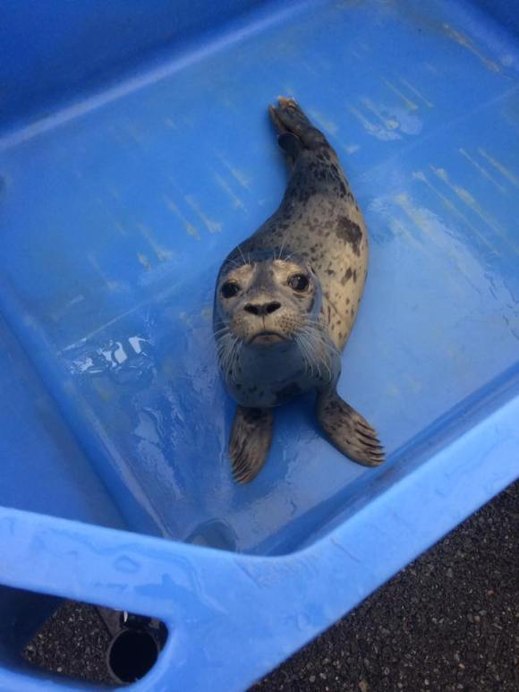 03 Marine Mammal Rescue